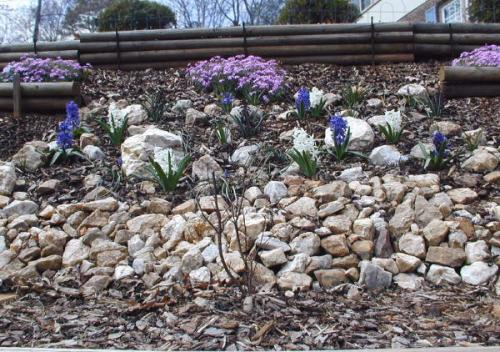 March '02 Front Hill Bulbs